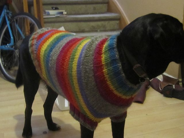 Boxer Dog Coat Knitting Pattern : The Ozzie large dog sweater pattern by Jenna Greer ...