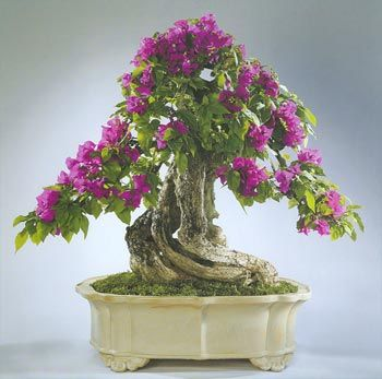 17 Best ideas about Bonsai Nursery on Pinterest Bonsai trees