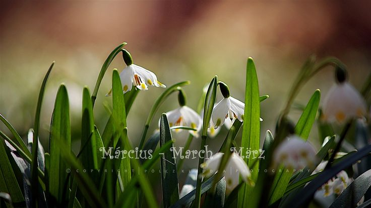Pölcz Klaudia - kisklau: Helló tavasz!