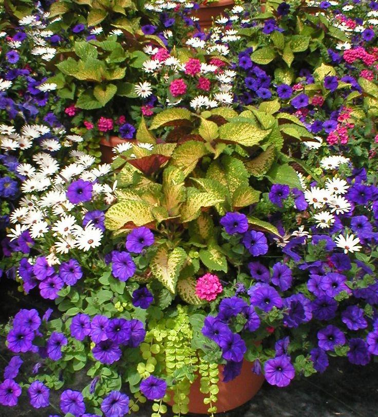 Power Flowers Container Garden