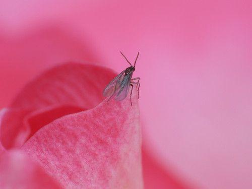 cele mai bune 25+ de idei despre comment tuer les mouches pe pinterest