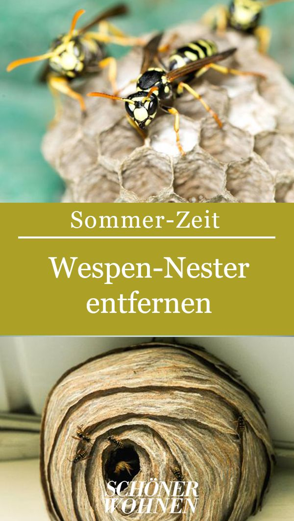 Wespennest Entfernen Tipps Hilfreiche Infos Wespe Mittel Gegen Wespen Nester