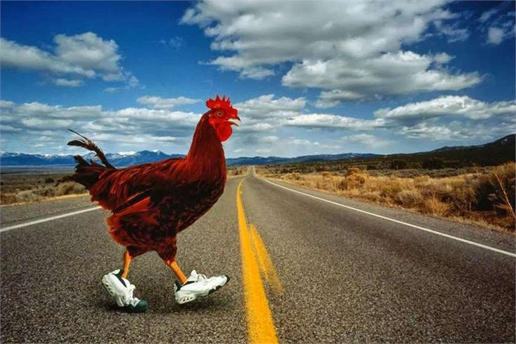 Do you know from where did the & why did the Chicken cross the road'; joke originate?