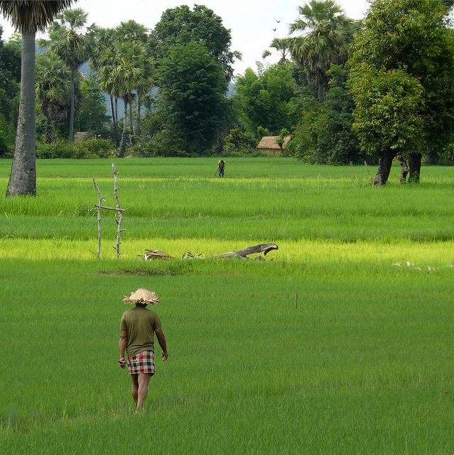 Ploughman walking home after work #Rice fields #Cluster #Expo2015