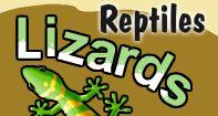 Lizards Video