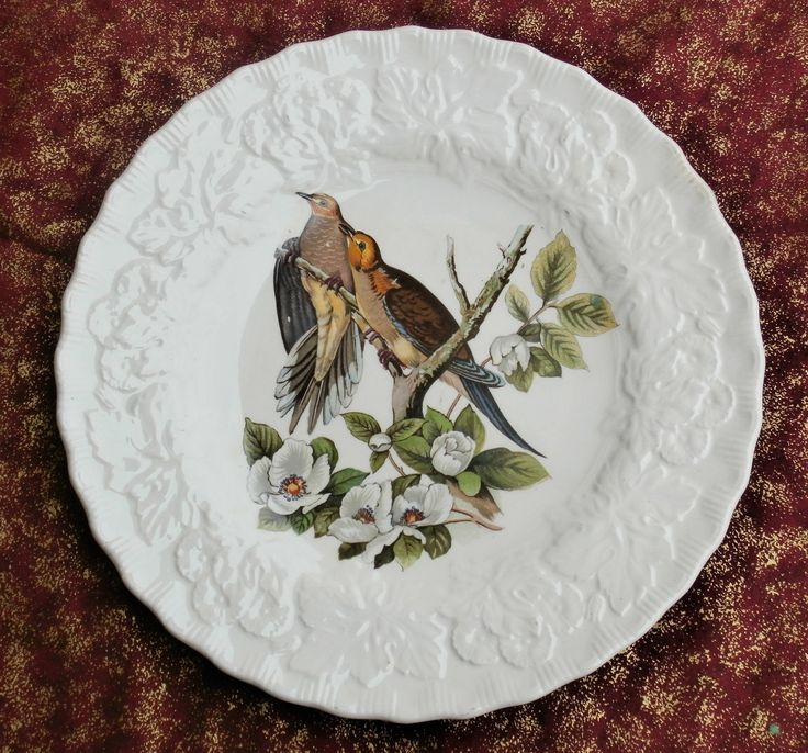 Meakins China Birds of America Carolina Turtle Dove Plate Audubon Plate 17 Vintage Collectible Bird http://etsy.me/2CpmK5f #vintage #collectibles #teamwwes #audubon #birdsofamerica #american #englishchina #england