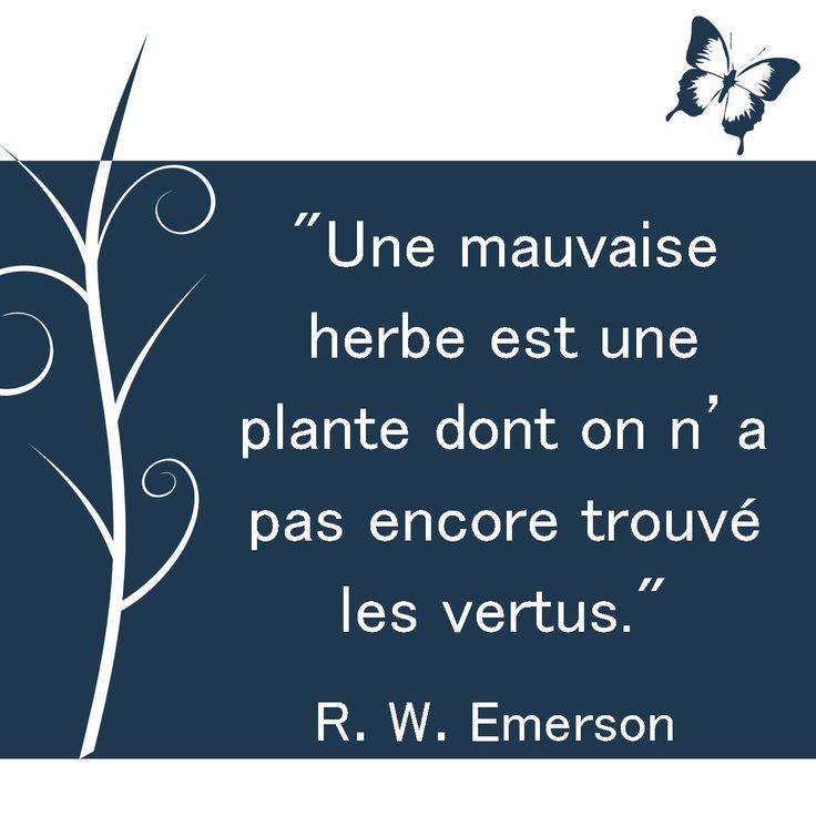 """""""Une mauvaise herbe est une plante dont on n'a pas encore trouvé les vertus."""" R. W. Emerson. [Citations et bonheur]"""