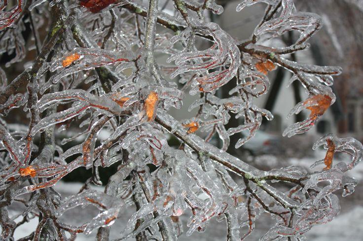 Frozen winter. KC Pix