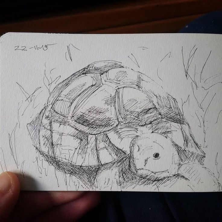 Here's a turtle guys!