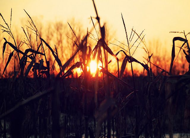 Watching the sunrise from a duck blind in a Missouri corn field.