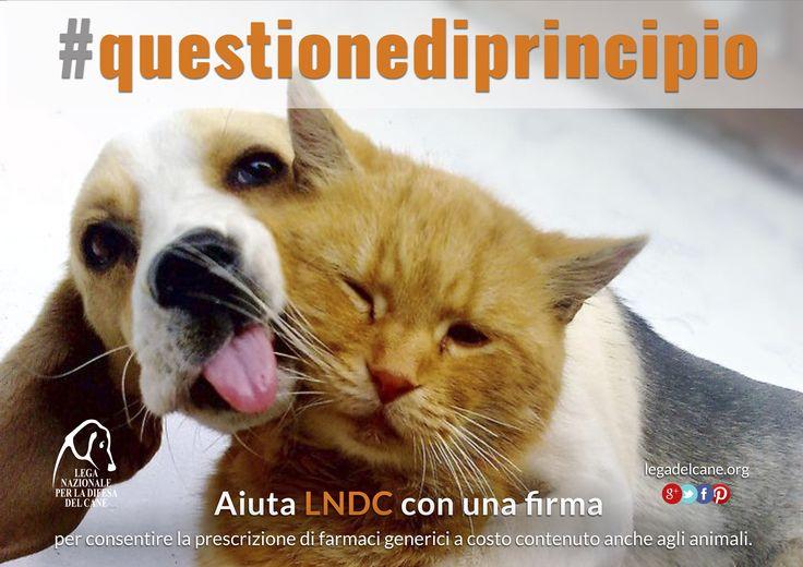 #questionediprincipio - #Petizione per i farmaci a costo accessibile per gli animali