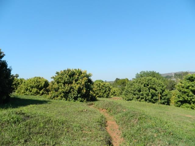 Stunning view of litchi trees