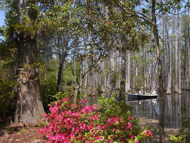 Cypress Gardens Places I 39 Ve Been Pinterest