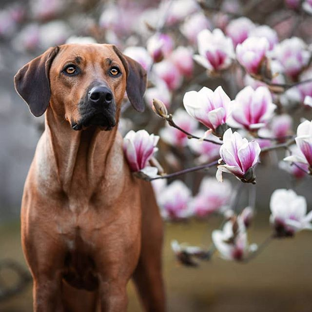 Anna Panke Photography On Instagram Farida In 2020 Hundefotografie Hund Portraits Tiere