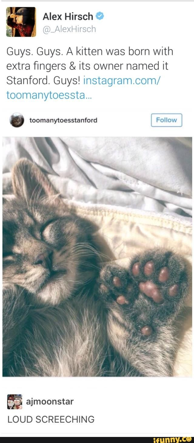 stanford, gravityfalls, alexhirsch, twitter, tumblr<<<<. It looks exactly like my cat!!!!!! Just mine doesn't have extra toes