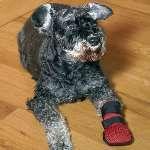 Soo Süß mit seinen neuen hundeschuhen!!  http://www.dogsfinest.de/category/hundeschuhe.106.html
