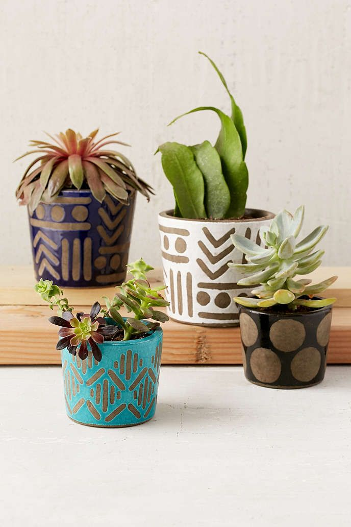 Assembly Home Jada Planter Urban Outers Awesome Patterned Pots And Houseplants Succulents