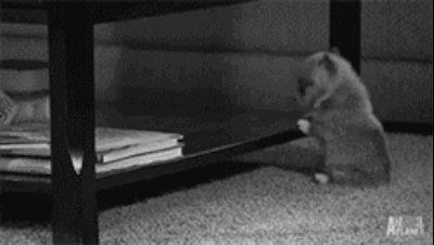 Este pequeño cachorro que intentó alcanzar nuevas alturas.   37 animales que fracasaron tan espectacularmente que casi ganaron