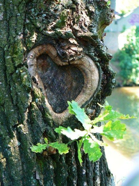 Dies ist ein Beispiel für ein Baum, der keines falls gefällt werden darf