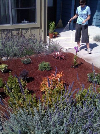 front yard idea - lavender, bark mulch