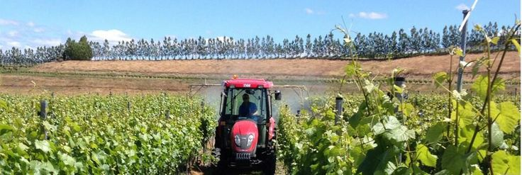 Mike spraying the fish oil on our Organic block, Pisa, Central Otago, NZ