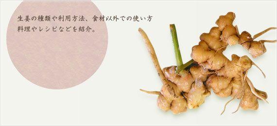【使える生姜!】簡単な生姜の栽培方法などを特集!