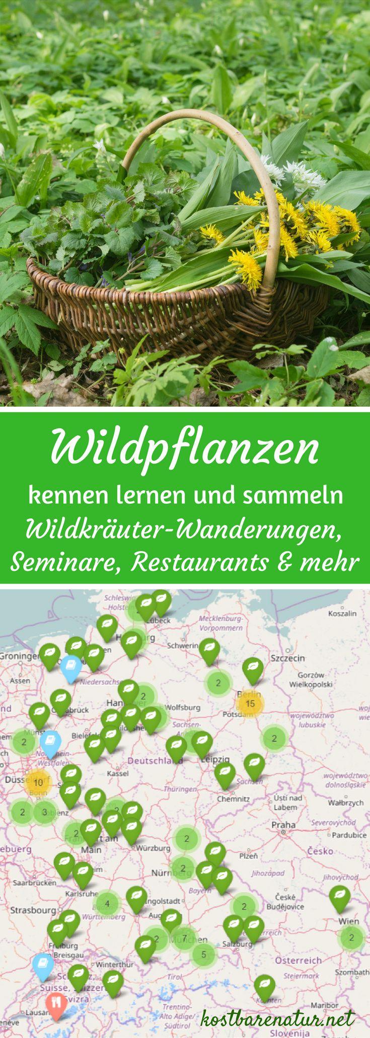 Du willst die Kräfte der Natur nutzen und neue Wildkräuter und Wildfrüchte kennen lernen? Auf dieser Karte findest du Wildkräuterwanderungen in Deutschland, Österreich und der Schweiz.