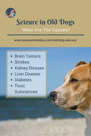 Old Dog Seizure | An Action Guide for Dog Owners
