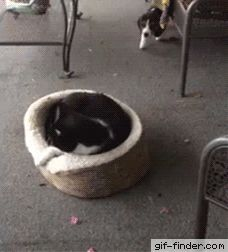 Puppy Scares Cat | Gif Finder – Find and Share funny animated gifs