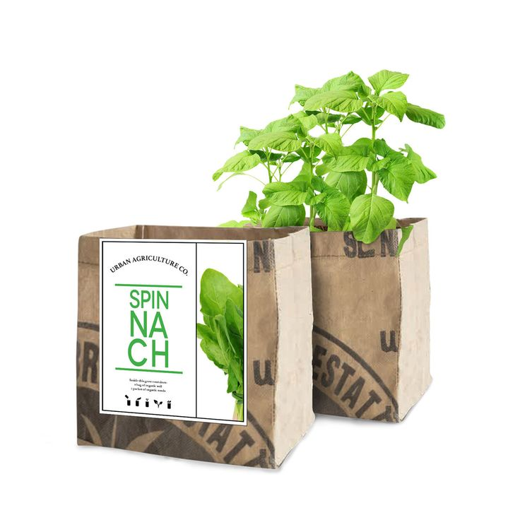 Spinach Grow Kit by the Urban Agriculture Company