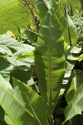 Tropicals Add High Drama Gargantuan banana trees deliver a lushness and scale that some traditional plants can't.  Read more: http://www.oprah.com/home/Backyard-Decorating-Tips-Patio-Design-Ideas/3#ixzz2RJl3sjsO