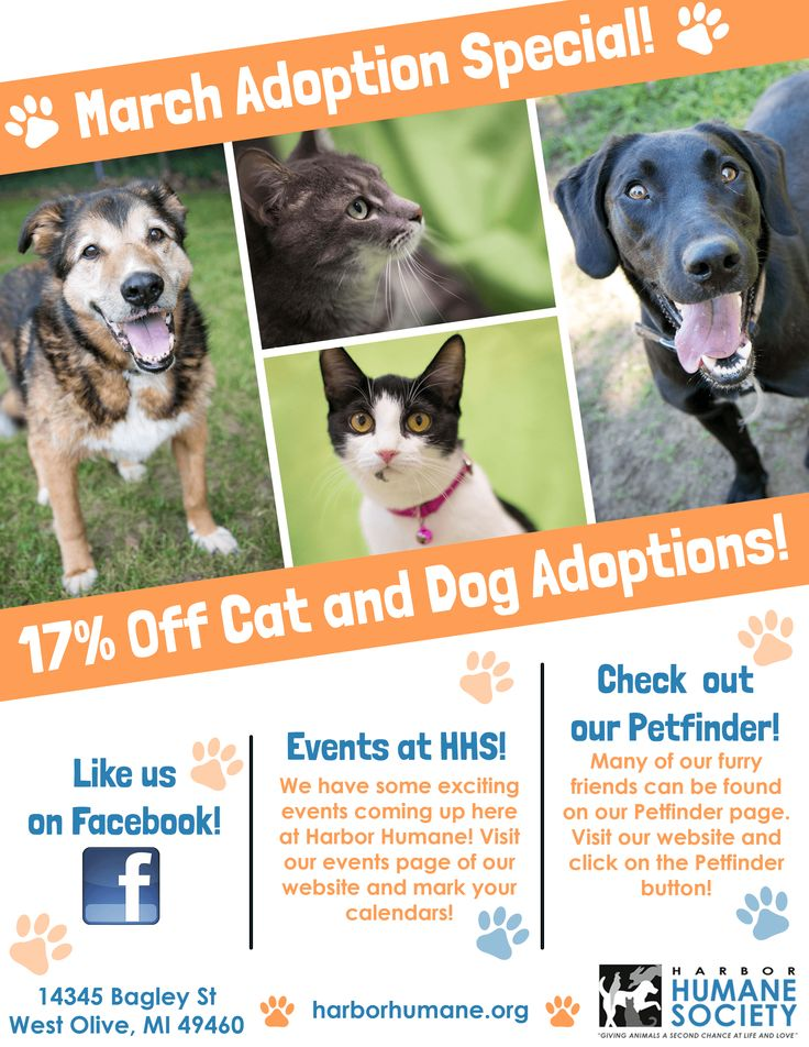 March Adoption Special Harbor Humane Society Nonprofit Org Serving Animals In Ottawa County Humane Society Animals Adoption