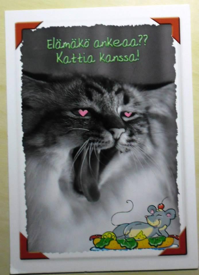 """En tykkää """"hauskoista"""" kissakorteista tai tällaisista, joissa on piirrelty kuvaan."""