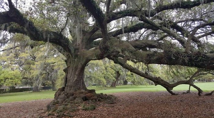 5) The Tree of Life, Audubon Park