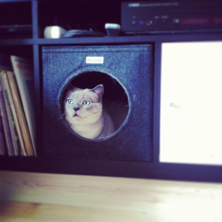 Legowisko dla kota, kryjówka dla kota, meble dla kota. Zobacz więcej na: https://www.homify.pl/katalogi-inspiracji/13318/pomysly-na-prezenty-dla-milosnikow-zwierzat