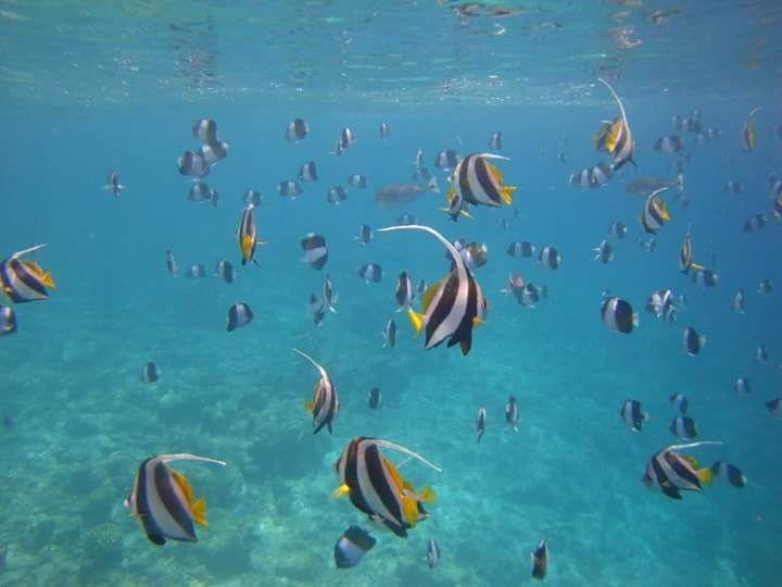 Fotografía: Rebeca Pizarro - Snorkel en Maldivas