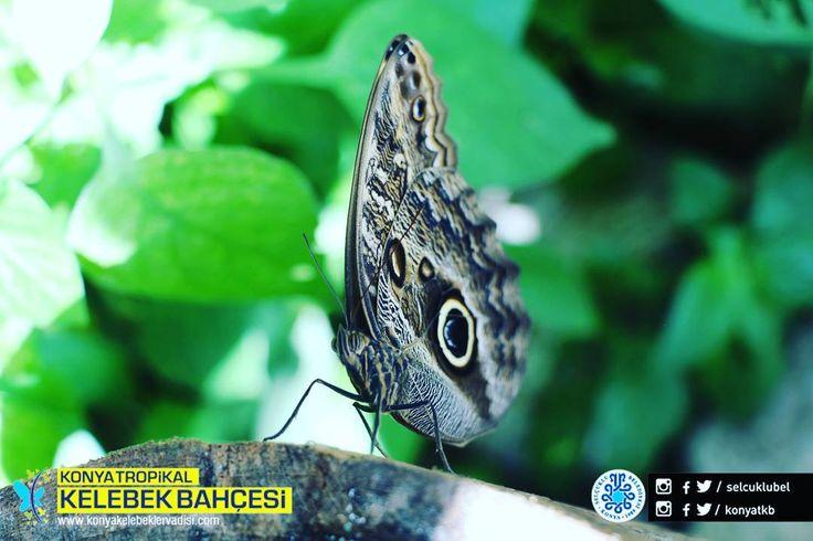 #konya #selçuklu #türkiye #tropikal #kelebek #bahçe #butterfly #flowers #botanical #photo #travel #tourism #tourist #mevlana #bununadiask #sebiarus #kelebeklervadisi #konyatropikalkelebekbahçesi http://turkrazzi.com/ipost/1524723042809564793/?code=BUo54dzhE55