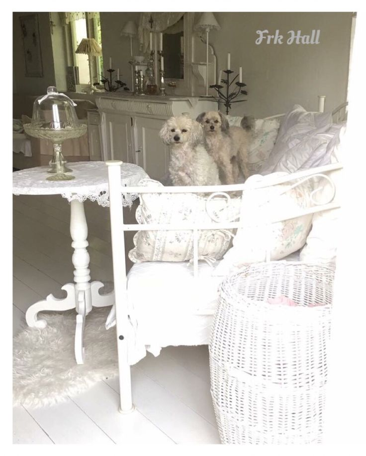My shabby chic white romantic home, and dogs chinese crested powder puffs