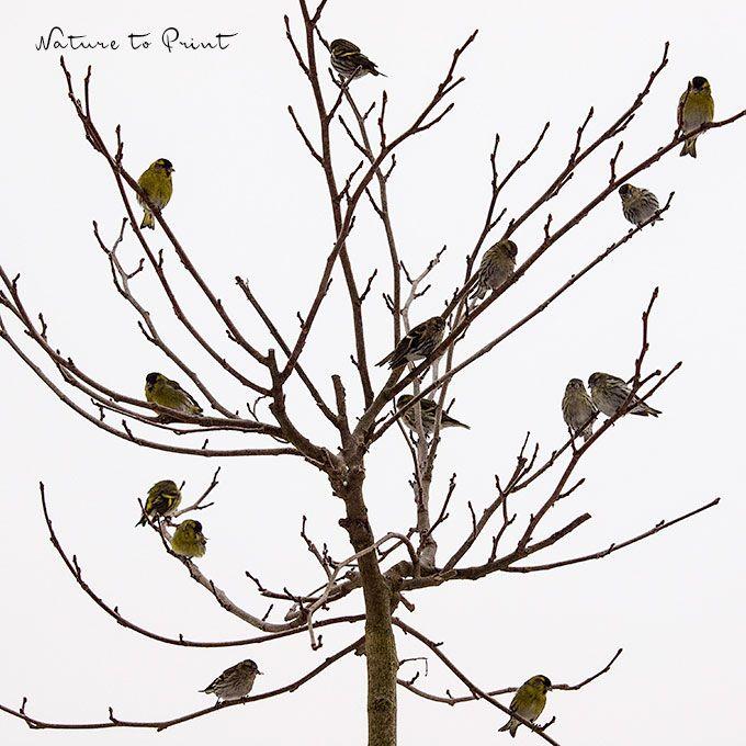 Vogelführer schlägt Internet. Vögel erkennen, leicht gemacht.