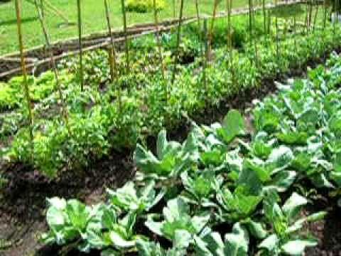 86 mejores im genes sobre huerta en pinterest plantas y for Plantas para huerta organica