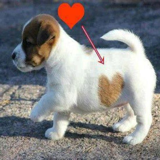 I had to share this because this puppy is far too cute <3