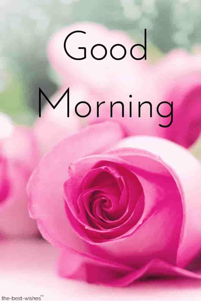 Gud Mrng Images With Roses Good Morning Wishes Good Morning