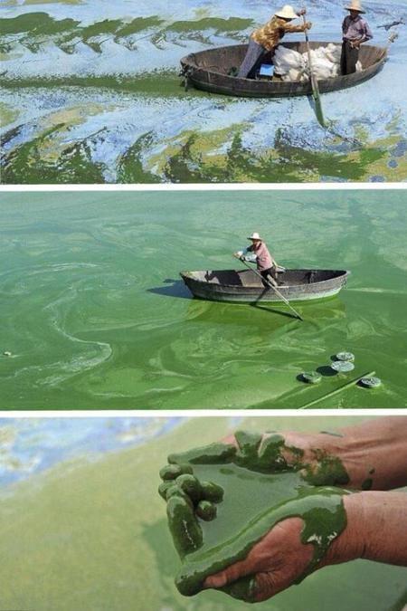 Dari kejauhan tampak seperti perahu di atas lautan penuh dengan tanaman air. Namun, lihat apa yang terjadi sesungguhnya. Hii!