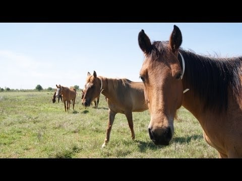 Adopt a Horse From The Houston SPCA!