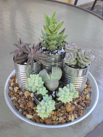 Succulent Garden: love the idea to use cans. now im never throwing out cans or spaghetti sauce jars when im gonna be doing some gardening! :)