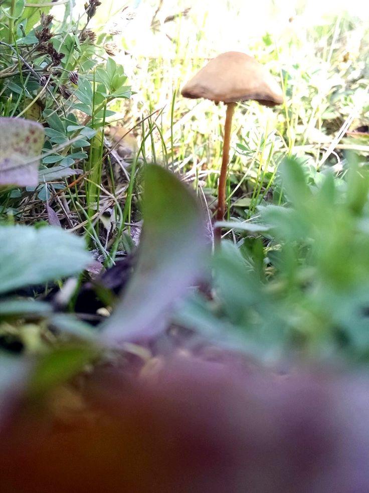 hongo en el campo