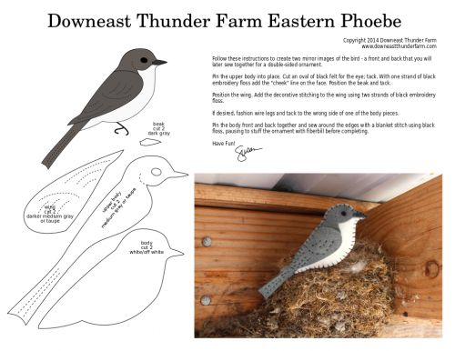 The Familiar Eastern Phoebe | Downeast Thunder Farm