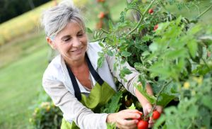 How to put your vegetable garden to bed for the winter - great info for whatever you're growing,