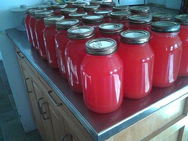 Amish Recipe:  Rhubarb Juice, double-check canning instructions for safety
