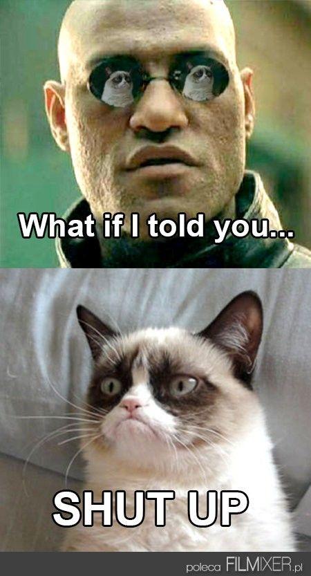 Grumpy Cat VS Morfeus // www.filmixer.pl